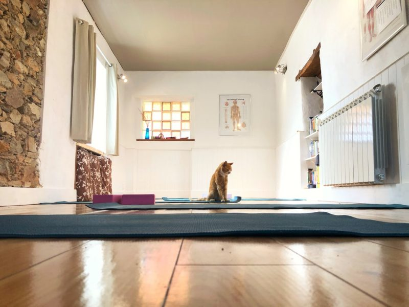 The Wholesome Advantages Of Yoga Coaching Programs